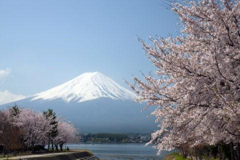 河口湖と桜と富士山