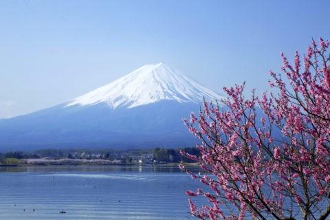 河口湖と桃と富士山