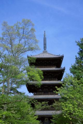 新緑と仁和寺五重塔 w