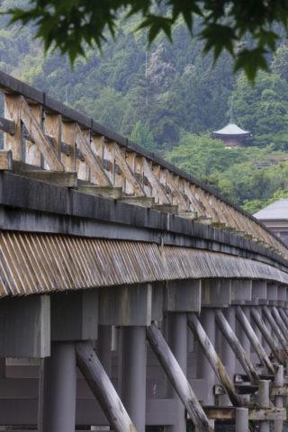 新緑の嵐山渡月橋と法輪寺