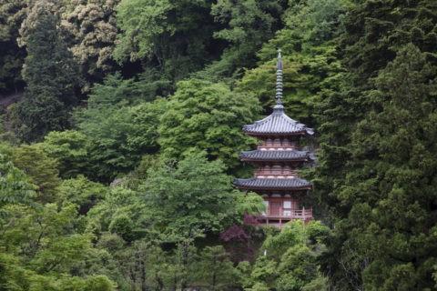新緑の三室戸寺三重塔