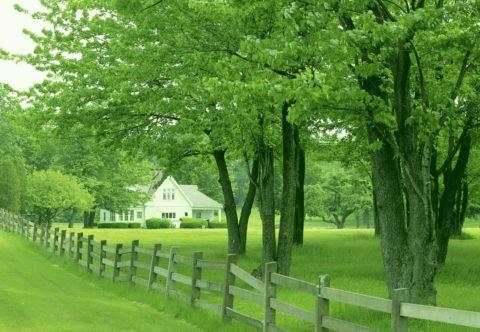 林の中の白い家