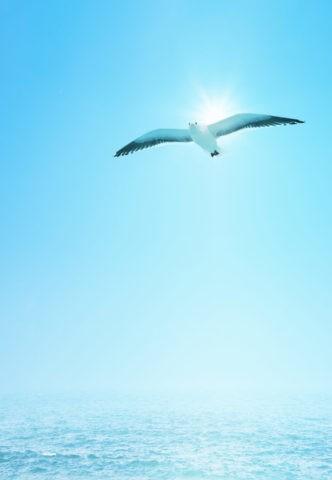 カモメと太陽と海