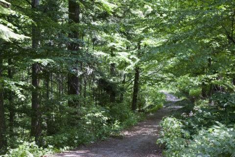 シナイア渓谷の森