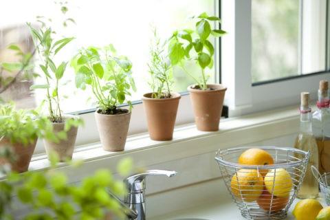 キッチン窓辺のハーブと果物