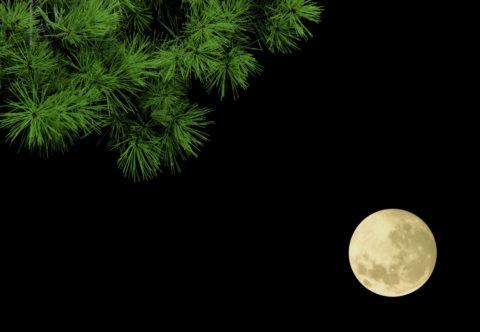 松と満月 黒バック