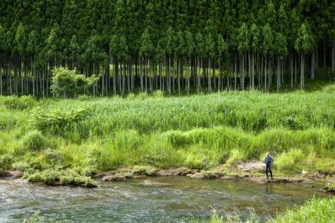 周山大堰川のアユ釣り