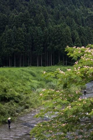 美山町由良川の鮎友釣り