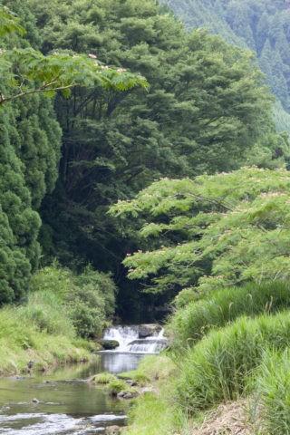ネムノキと清滝川