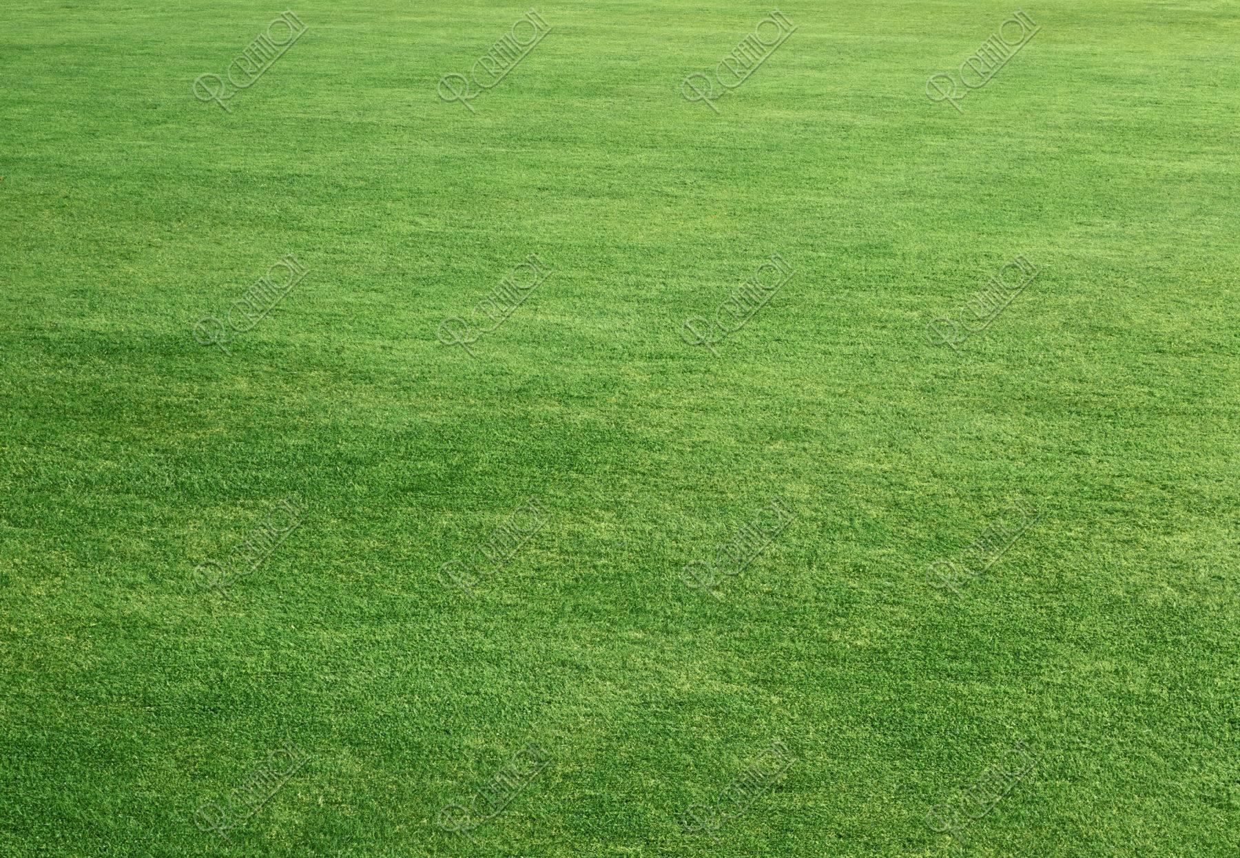広がる芝生イメージ