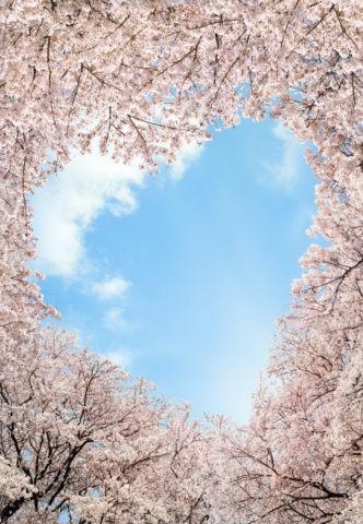 桜とハート形に開いた空