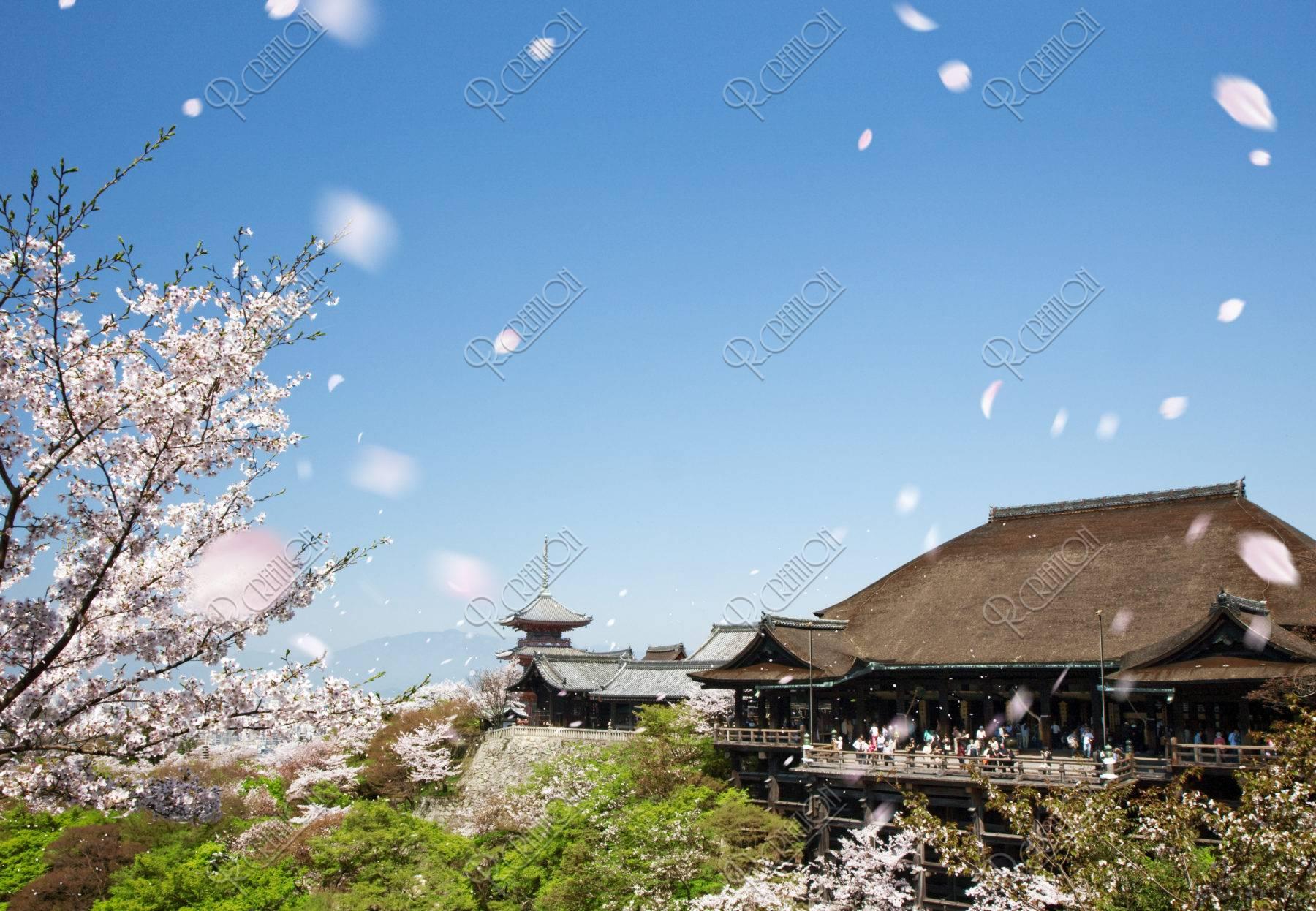 清水寺に舞う桜吹雪