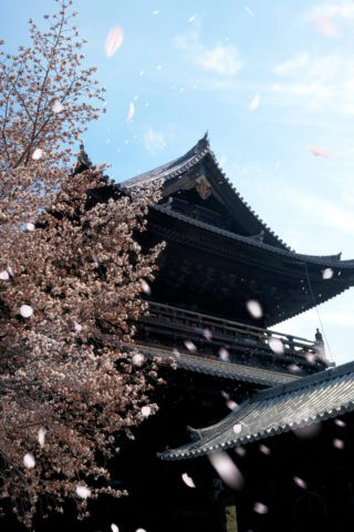 南禅寺三門に舞う桜吹雪