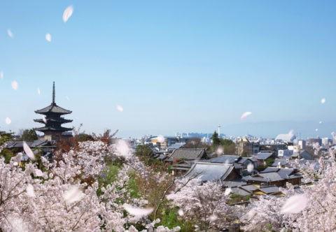 桜の舞う京都市街遠景