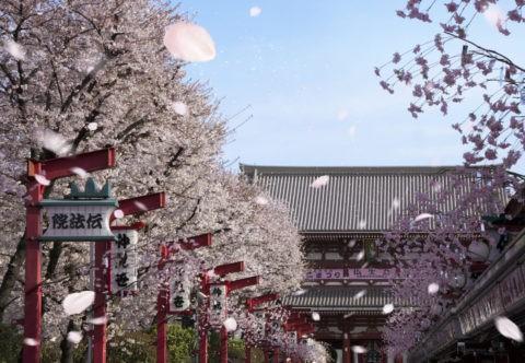 桜吹雪と浅草仲見世通り