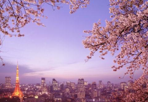 夕照の東京と桜