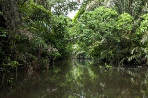 トルトゥゲーロ国立公園 パーム運河