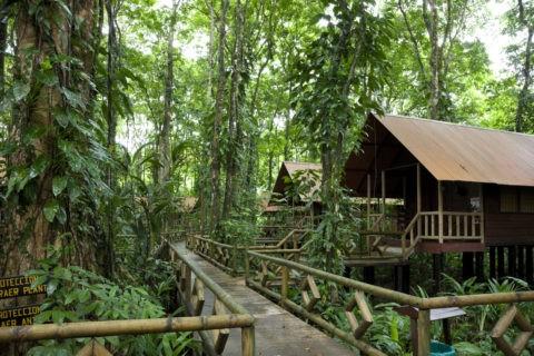トルトゥゲーロ国立公園 エバーグリーンロッジ