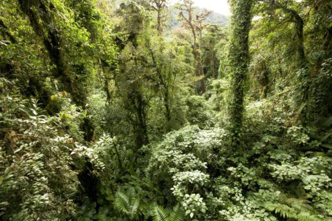 モンテベルデ自然保護区 自然林