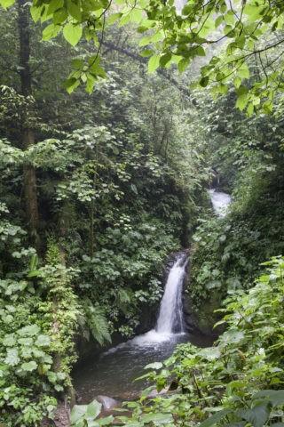 モンテベルデ自然保護区 熱帯雲霧林 滝