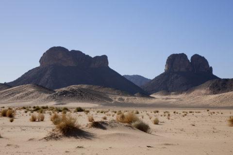 砂漠の草木と岩山 世界遺産