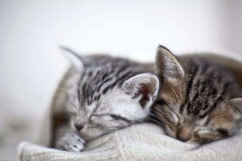 眠る3匹の子猫