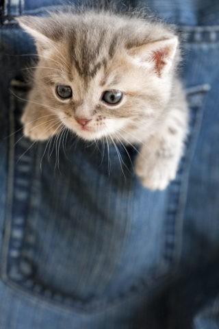 ポケットに入った子猫