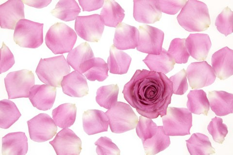 バラの花びらと一輪のバラ