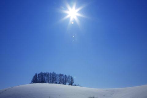 美瑛 カラマツの丘と太陽