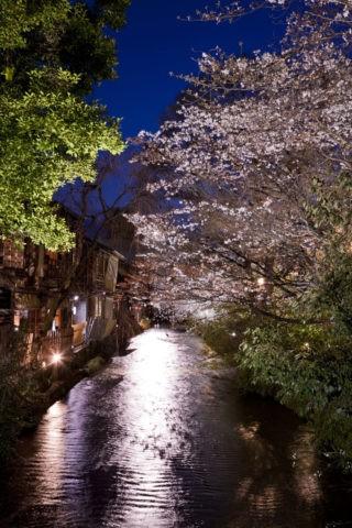 祇園白川の夜桜