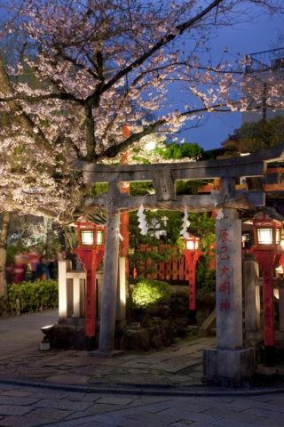 祇園白川辰己大明神の夜桜