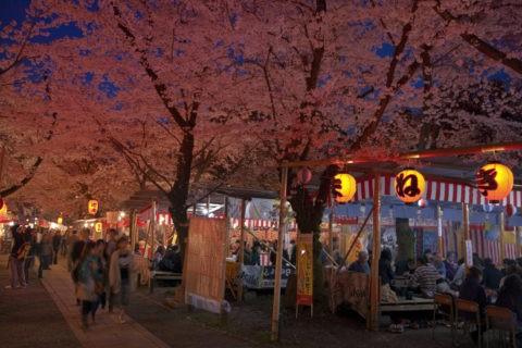 平野神社の夜桜とお花見