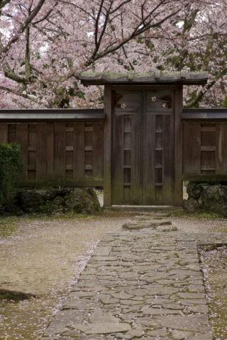 勝持寺(花の寺)の桜