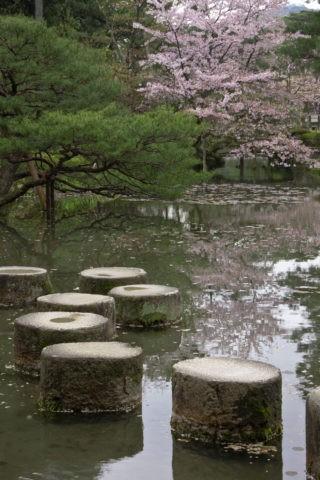 平安神宮 臥龍橋と桜