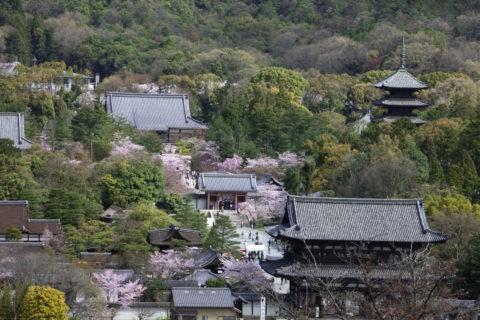桜咲く御室仁和寺 世界遺産