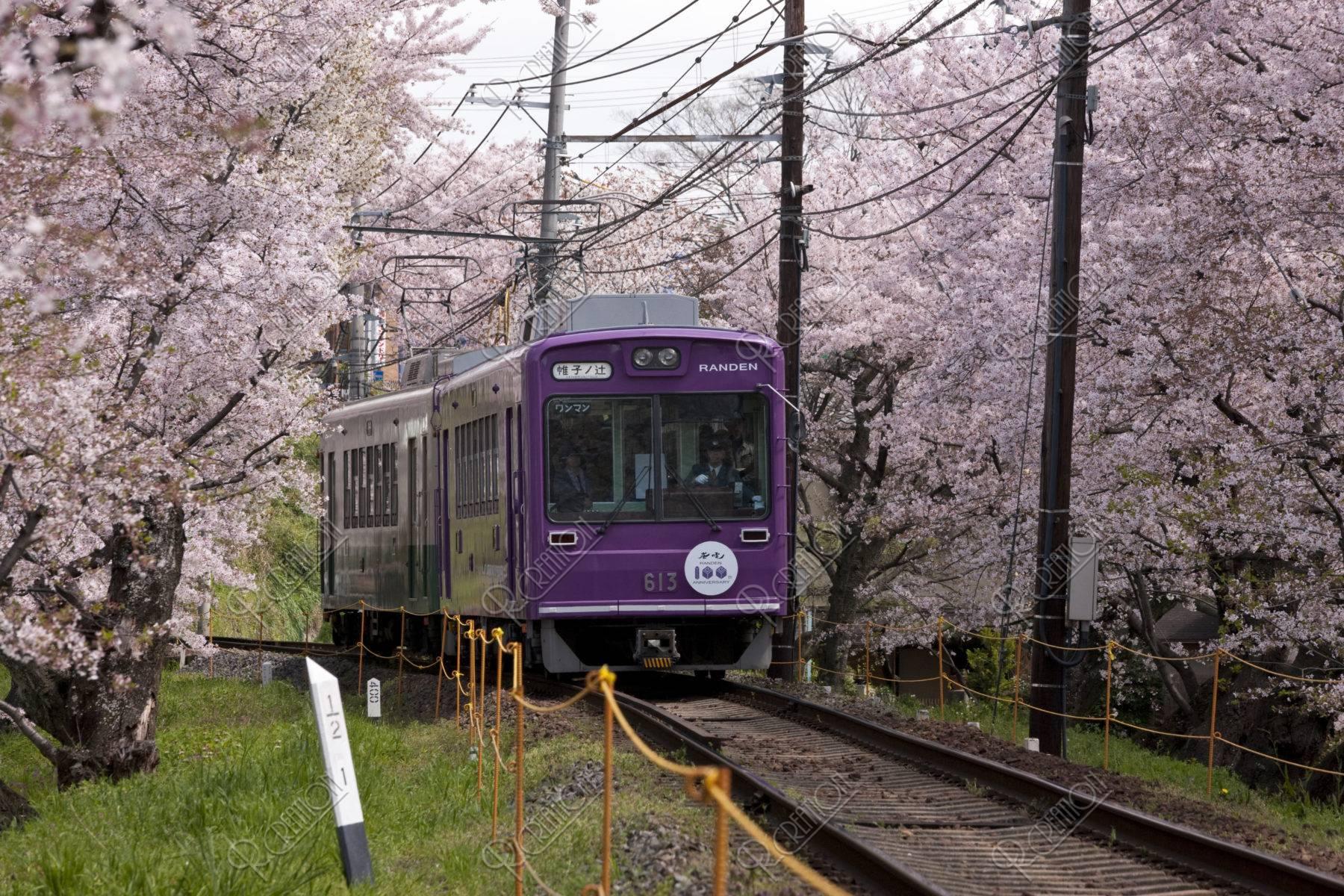 嵐電と桜のトンネル