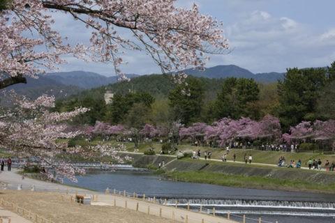 賀茂川と半木の道