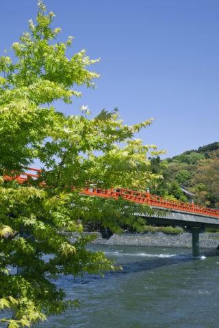 宇治川 朝霧橋