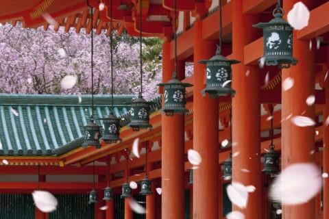 平安神宮の桜と回廊