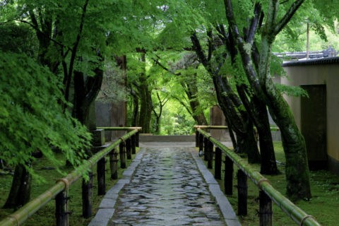 光悦寺 新緑の参道