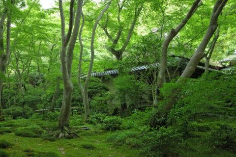 祇王寺 苔の庭