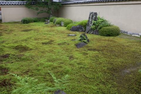 大徳寺 龍源院 庭園