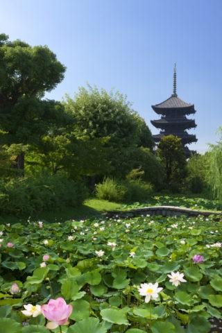 東寺 五重塔とハス 世界遺産