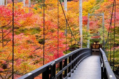 高雄 吊り橋 紅葉