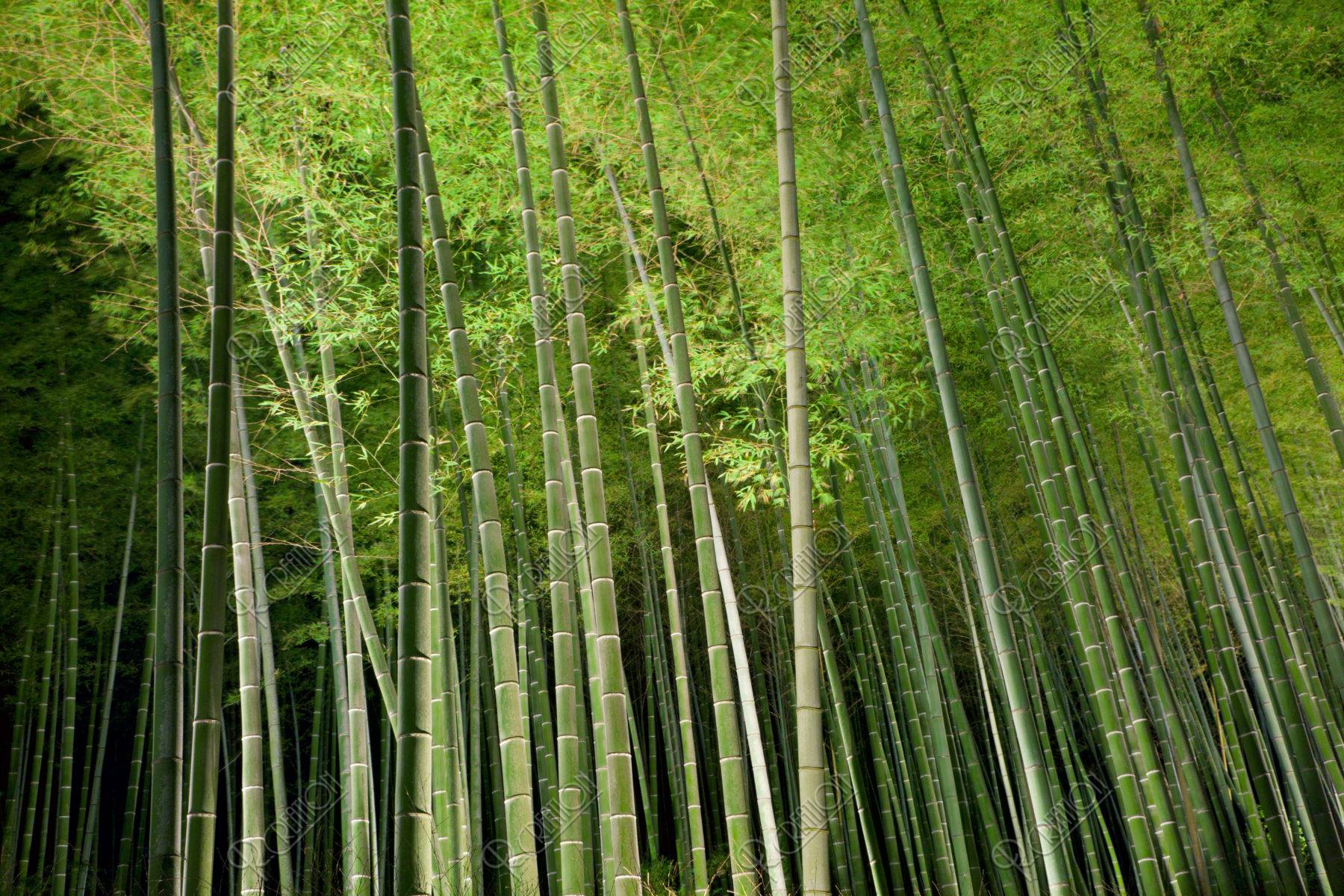 嵐山花灯路 竹林