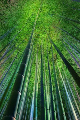 嵯峨野 夜の竹林