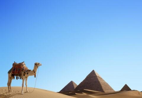 ピラミッドのある砂漠にラクダ