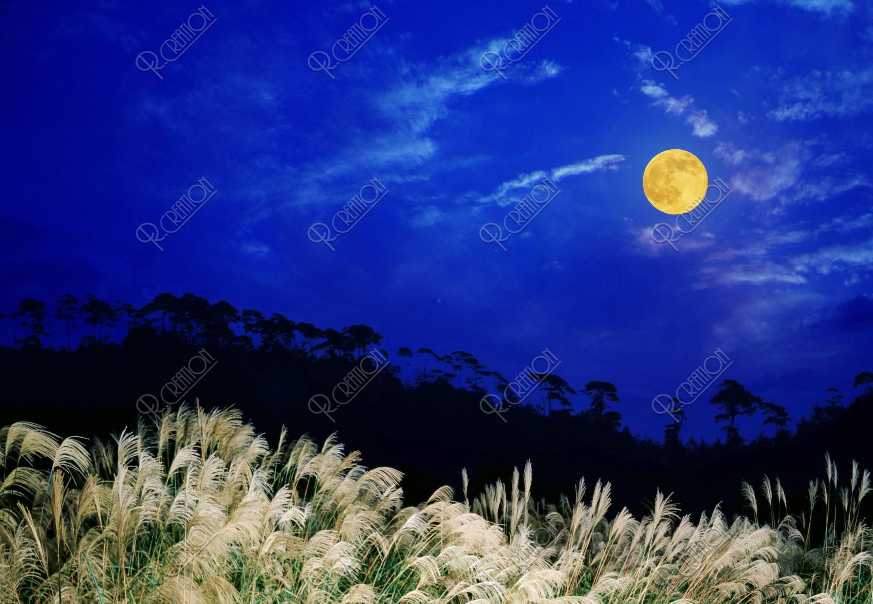 すすきと満月