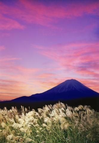 夕焼けの富士山とすすき