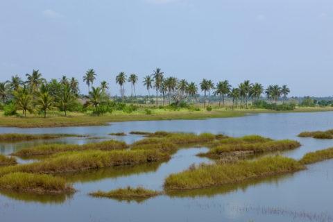湿地の漁法
